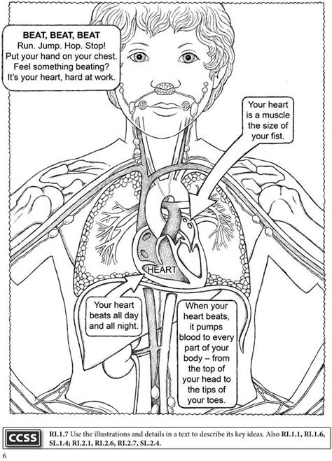 human body coloring book anatomy human body science