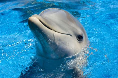 dolphin wallpaper for bathroom جام نیوز jamnews کشف دلفین دو سر عکس