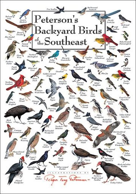 southeast backyard birds chart wildlife identification