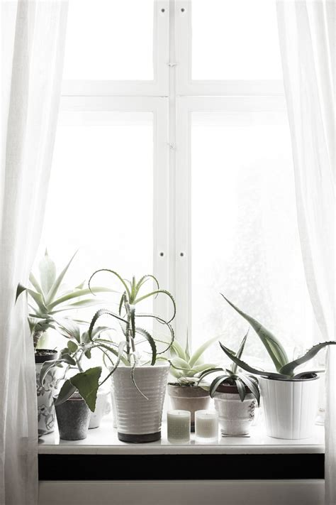 Best Windowsill Flowers 25 Best Ideas About Window Plants On Indoor