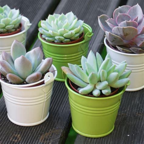 Office Decoration Theme by Mini Plantes Grasses Un Cadeau Pour Tous Les Invit 233 S