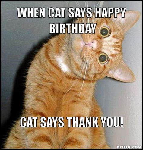 Birthday Meme Generator - happy birthday sad cat
