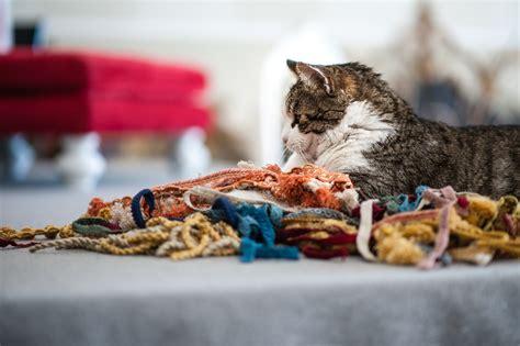 tappezzeria gatti marco il tappezziere lavora con i gatti a mici di