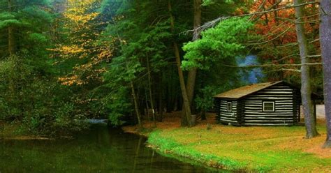 Black Cabins Cooks Forest by Pittsburgh Owl Scribe Cook Forest State Park Is Now