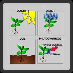 plant life cycle phases phase two sprouts and roots