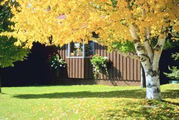 shade tree for small backyard information on shade trees for small yards home guides sf gate