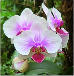 Tropical Rain Forest Plant - tropical orchids photograph by mindy newman