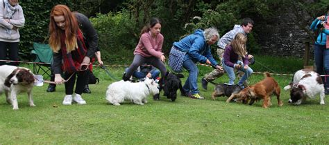 dogs day out a dogs day out at traquair traquair house