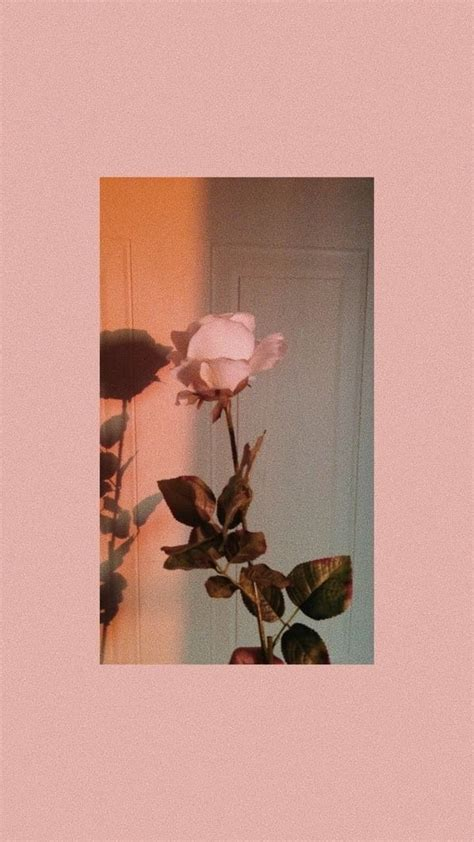 background peach aesthetic flowers collages rose