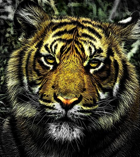 Jual Kaos 3d Keren Kekinian Singa gambar harimau macan nawasanga karakter cenderung agresif