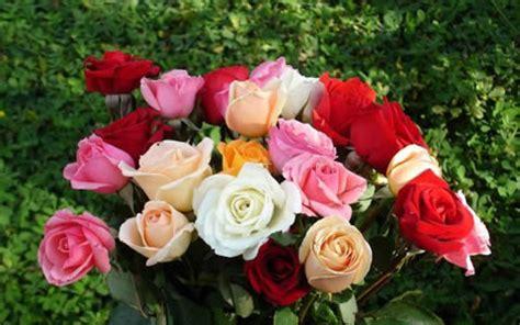 imagenes de rosas muy hermosas fotos de flores bonitas