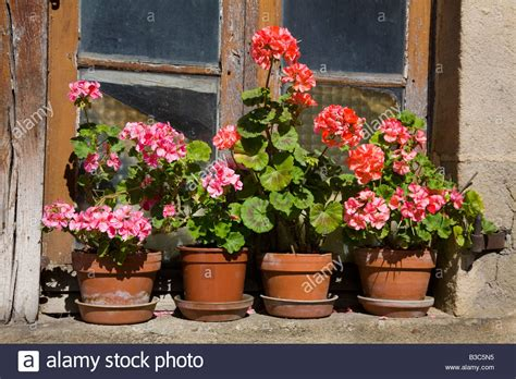 Flower Pots On Window Sills Pots Of Geraniums On An Rustic Window Sill