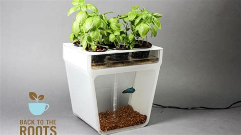 home aquaponics kit  cleaning fish tank  grows