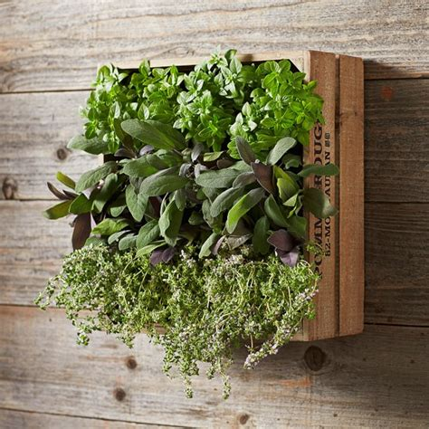 wine crate vertical planter williams sonoma