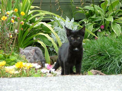 cat garden paper crafts for children 187 animals
