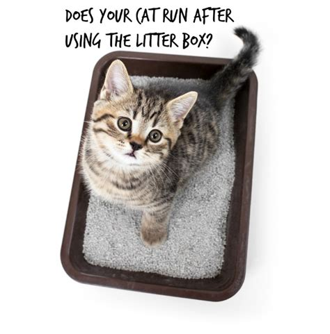 Cat Stool Outside Of Litter Box by Cat Litter Box Habits Does Your Cat And Dash
