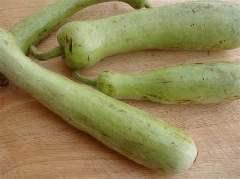 Gourd Ls by How To Clean And Prepare Bottle Gourds
