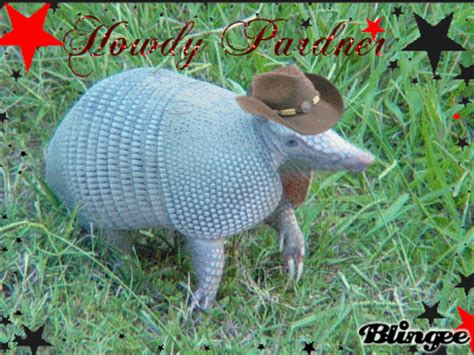 Armadillo Meme - armadillo gif find share on giphy
