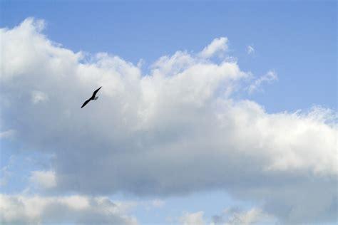 il gabbiano uccello ste artistiche quadri e poster con cielo gabbiano