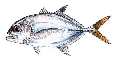 scientific illustration 233 by scientificartist on deviantart