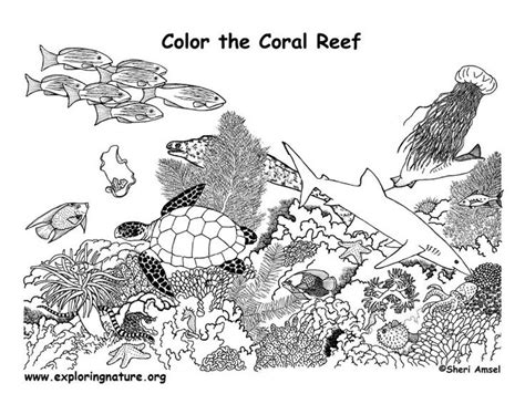 Coral Reef Worksheets For by 17 Best Images About Coral Reef Coloring Pages On
