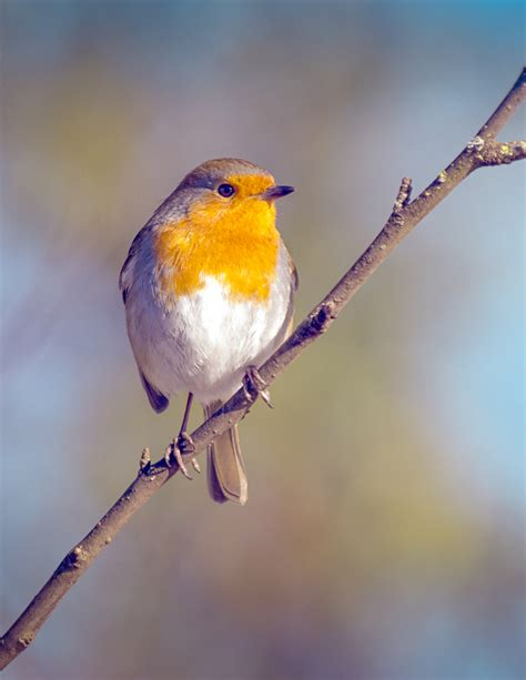 robins can see magnetic fields but only in one eye