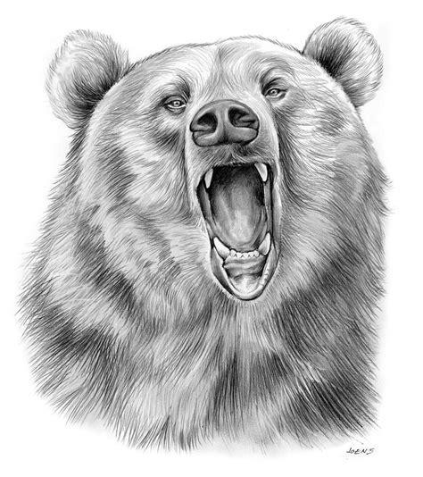 Growling Bear Drawing by Greg Joens