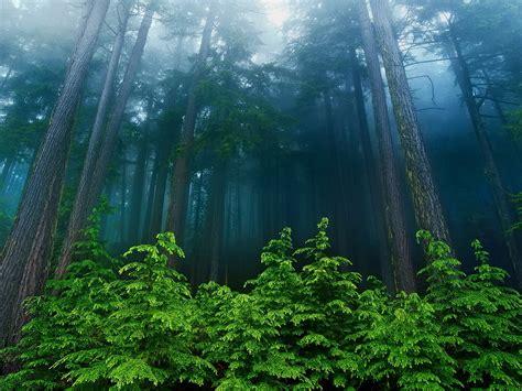 imagenes naturaleza maravillosas bonito pa 237 s parque reserva devota con verde suave deja