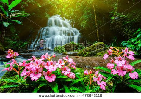 beautiful waterfalls with flowers waterfalls with flowers www pixshark images