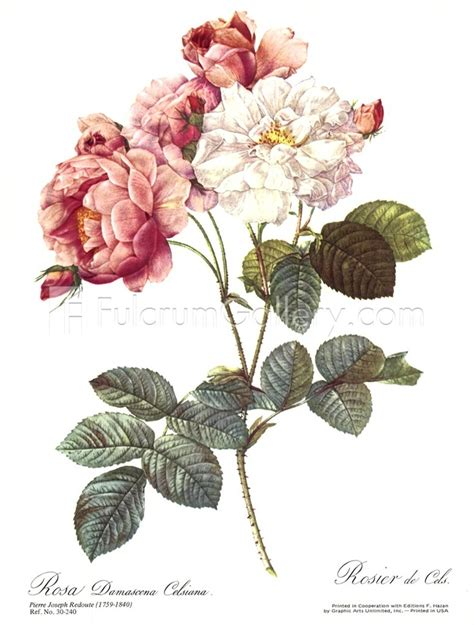 redoute the book of 97 87 best botanical prints images on edith holden paintings and botanical prints