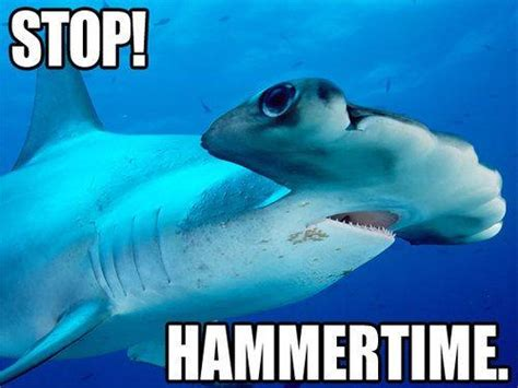 Funny Shark Memes - funny shark quotes quotesgram
