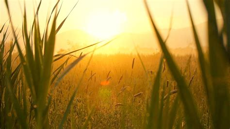 beautiful light relaxdaily essence n 2 episode relaxing instrumental soft peaceful