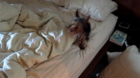 wet dog pees on the bed youtube