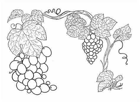 Grapes Coloring Pages Grapes Coloring Pages