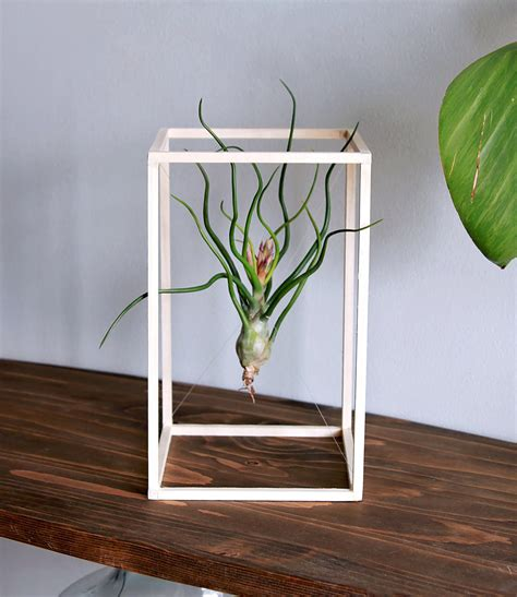 plant for desk life boxed in air plant minimalist art desk plant