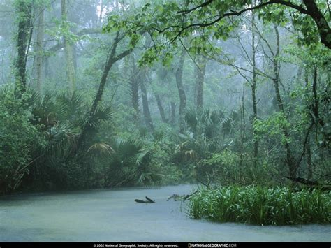 Paper Wallpaper Water Nature Trees National Geographic Rainforest