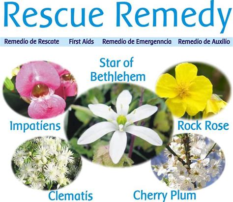 fiori di bach resource remedy rescue remedy fiore di bach n 39 resource remedy