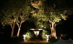 outdoor up lighting for trees light up your trees event lighting
