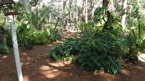 Florida Friendly Landscaping Larger Lots Florida Friendly Landscaping