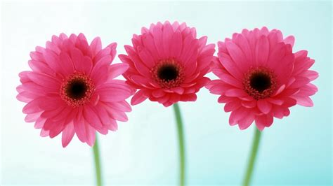 flowers for flower lovers.: HD flowers wallpapers.