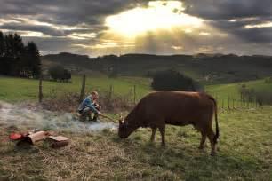 film la vache photo du film la vache photo 4 sur 13 allocin 233
