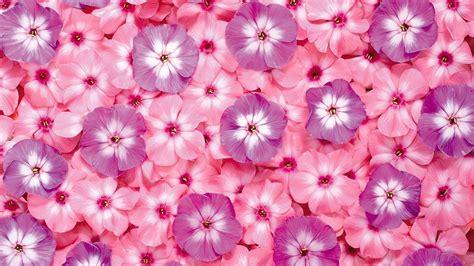 wallpaper pink flowers pink flower wallpaper backgrounds wallpaper cave