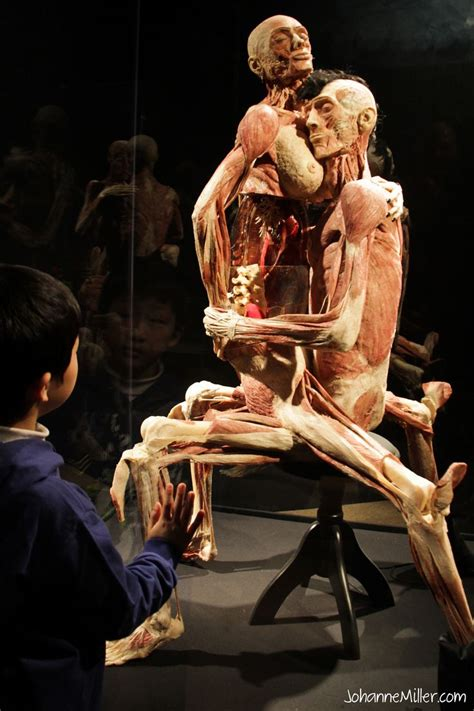 the body in the 17 best images about art plastination humans on circulatory system heidelberg and