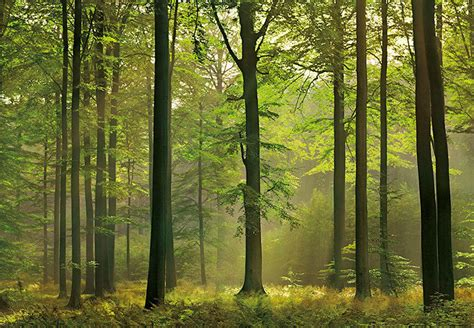 Forest L by Wall Mural Photo Wallpaper Magic Forest Large Size Wall