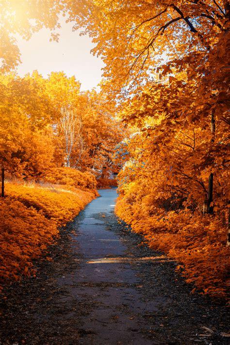 wallpaper autumn park autumn trees foliage path autumn