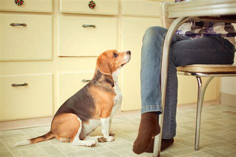 Table Food For Dogs by Sheknows Entertainment Recipes Parenting Advice