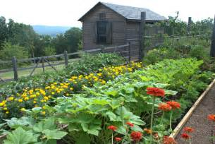 summer maintenance for your vegetable garden bonnie plants