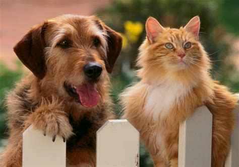 dogs or cats toxic foods for dogs cats pet health article texvetpets