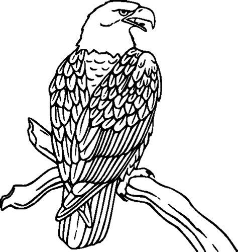 bird coloring book bird coloring pages coloring pages to print