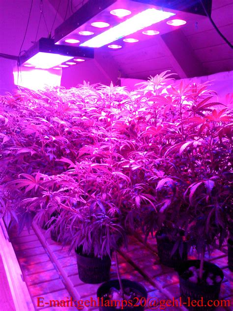 grow light led  soilless cultivation